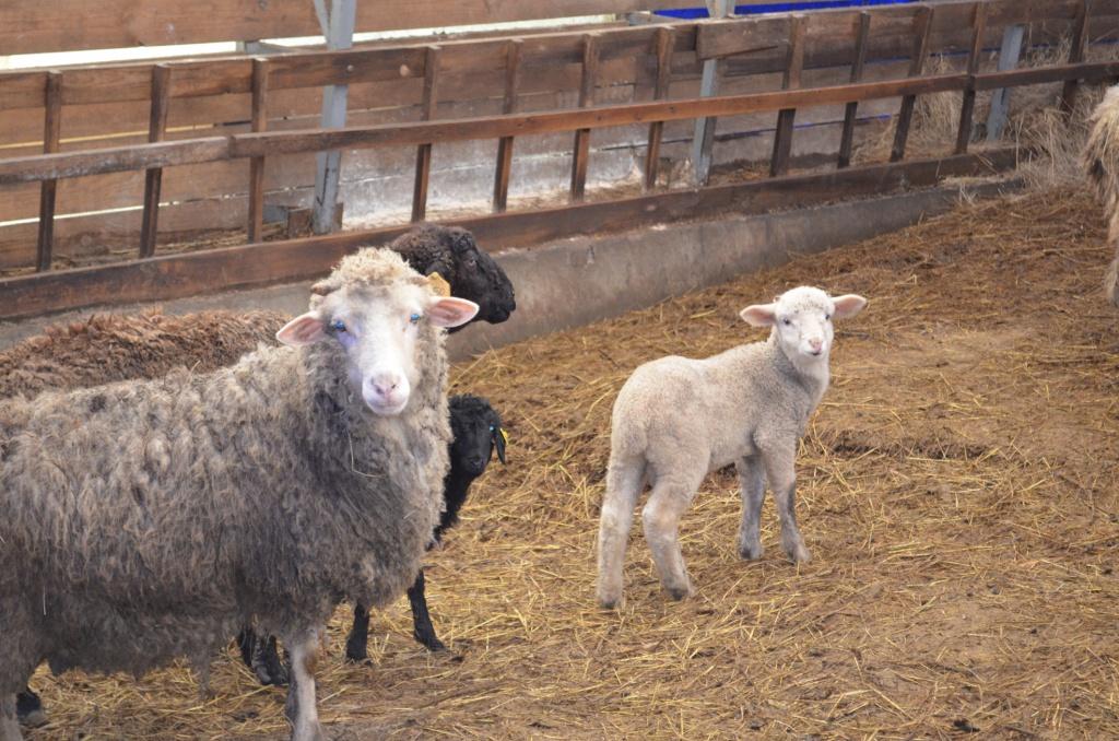 овчарня эконом
